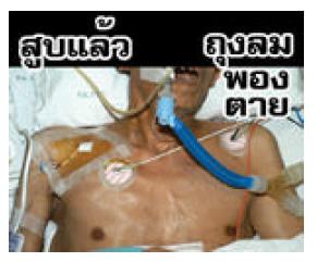 thaila1